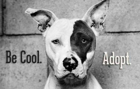 be-cool-adopt.jpg