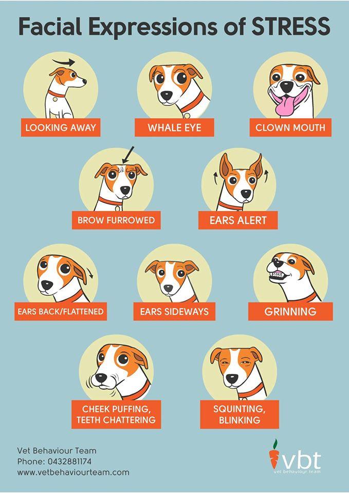DogStressFacialExpressionsVBTChin.jpg